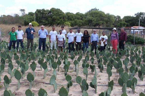 Palma forrageira, resultado de ações realizadas com recursos do FIDA (Foto: Divulgação)