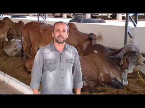 Cultivo agroecológico em Oeiras ensina novas técnicas para trabalhar com a terra